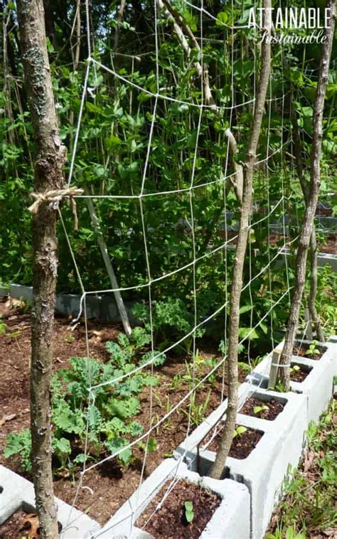 Diy Trellis Netting